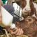 Biestkwaliteit verhogen met Colostrum van Farm-O-San