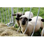 Patura vierkante hooiruif voor schapen
